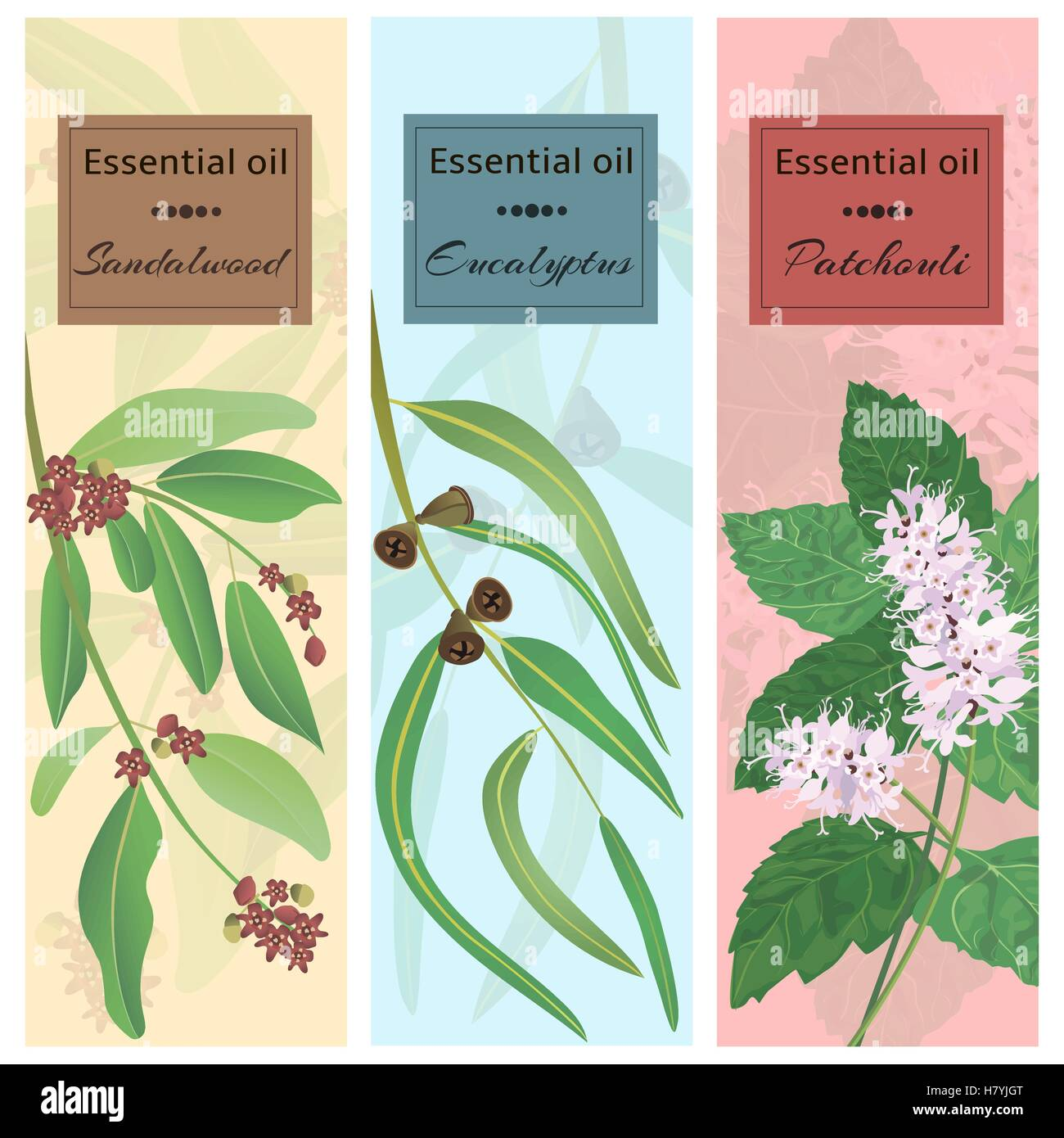 Essential oil set collection. Sandalwood, eucalyptus, patchouli banner set. Vector illustration EPS 10. - Stock Vector