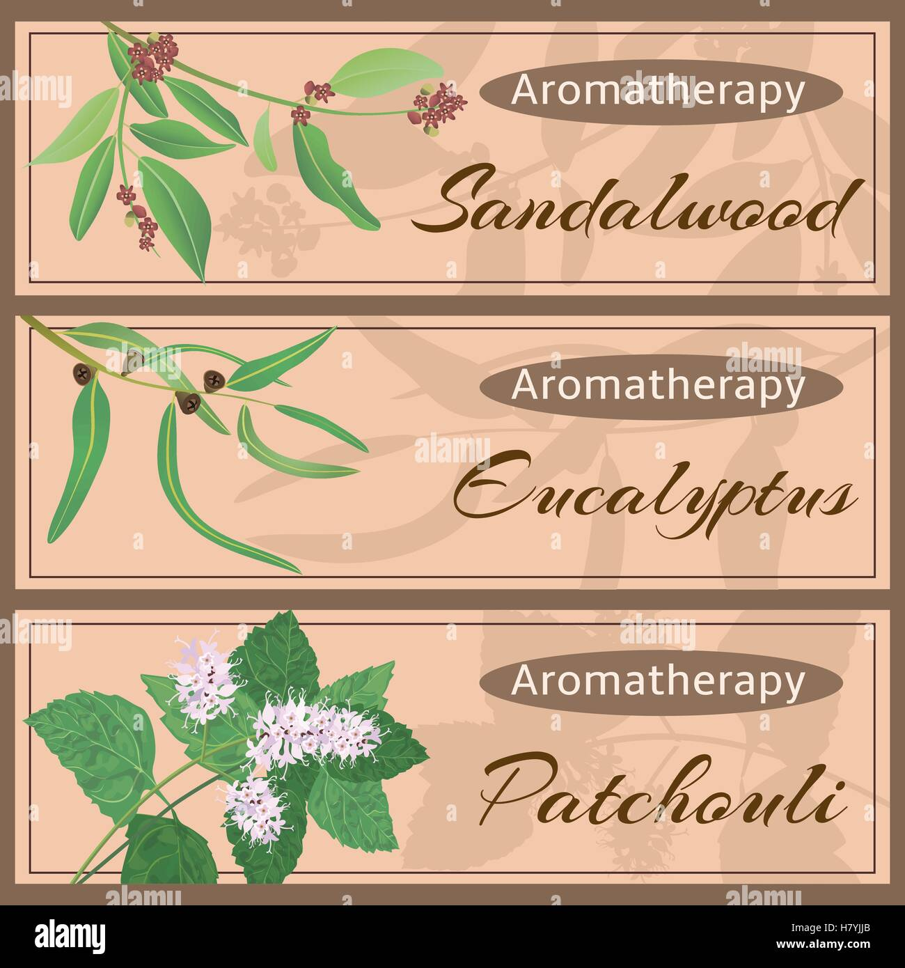 Aromatherapy set collection. Sandalwood, eucalyptus, patchouli banner set. Vector illustration EPS 10. - Stock Vector