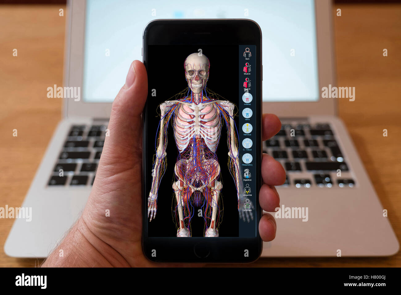 Using iPhone smartphone to display anatomy education app of human body. - Stock Image