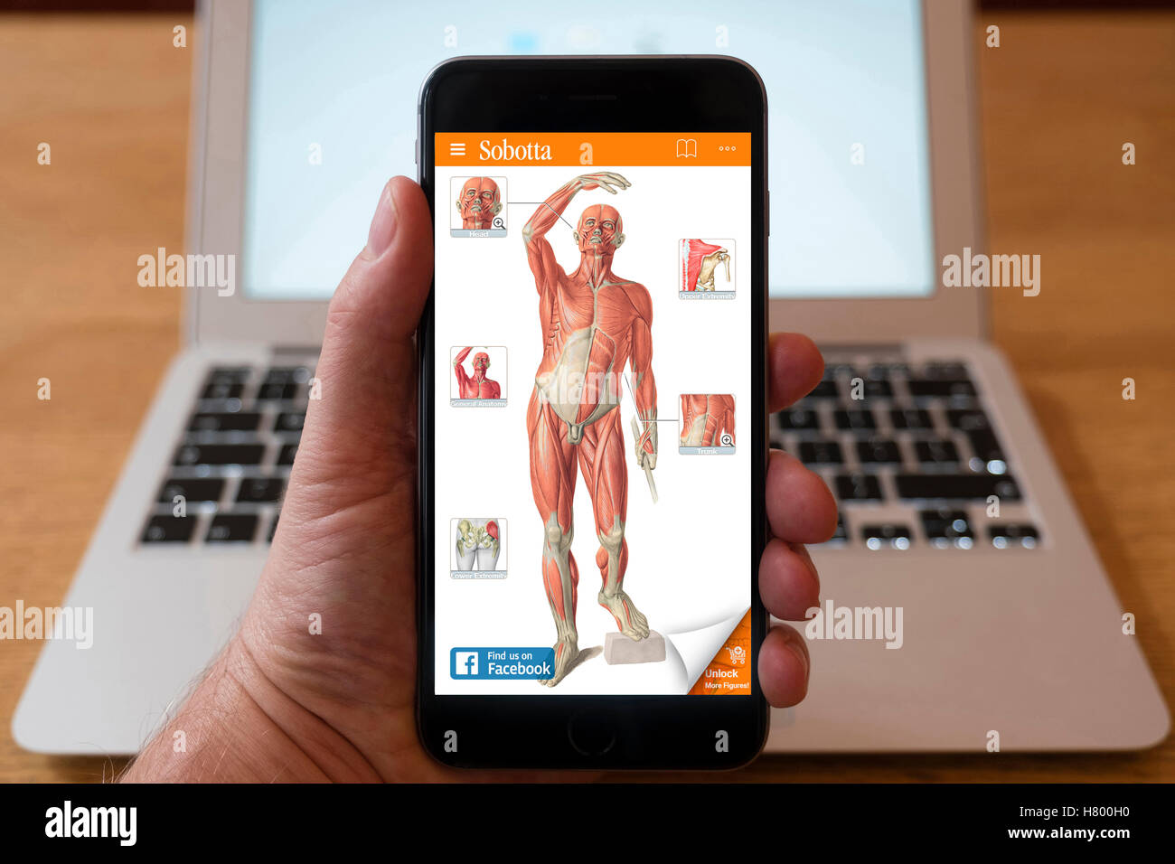 Using iPhone smartphone to display anatomy educational app of human body. - Stock Image