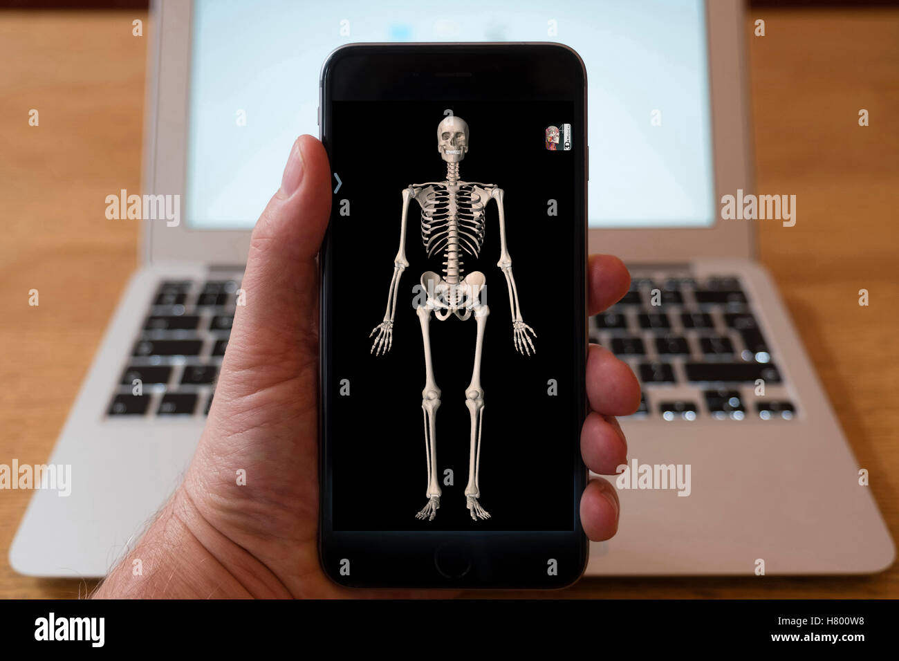 Using iPhone smartphone to display 3D image of human skeleton from anatomy medical education app - Stock Image