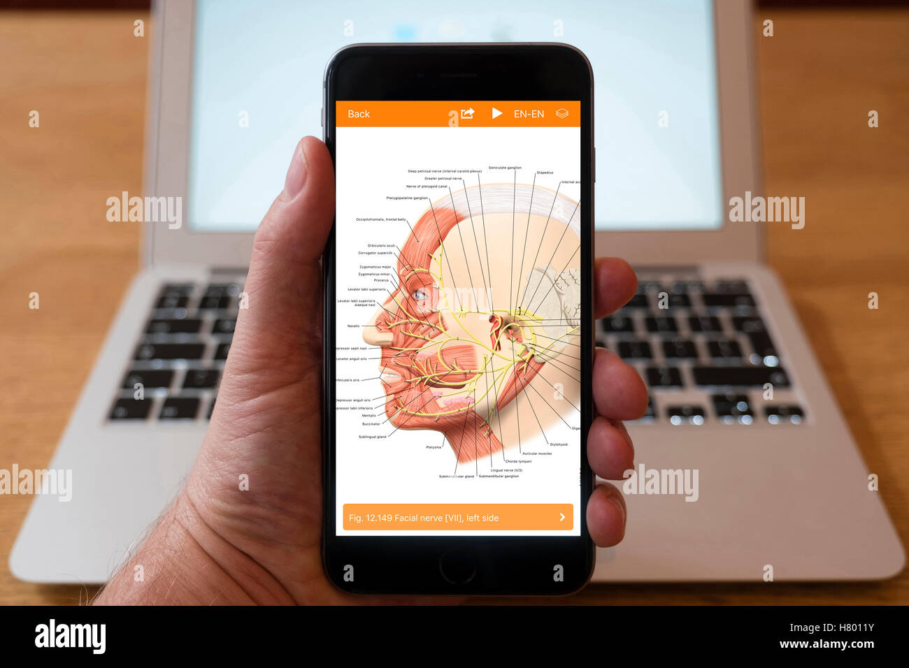 Using iPhone smartphone to display image of human head from human anatomy medical educational app - Stock Image