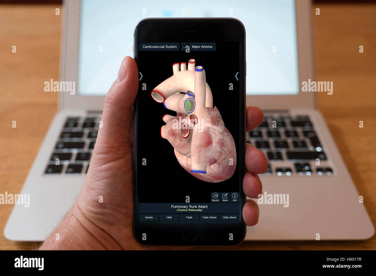 Using iPhone smartphone to display 3D image of human heart  from anatomy educational app - Stock Image