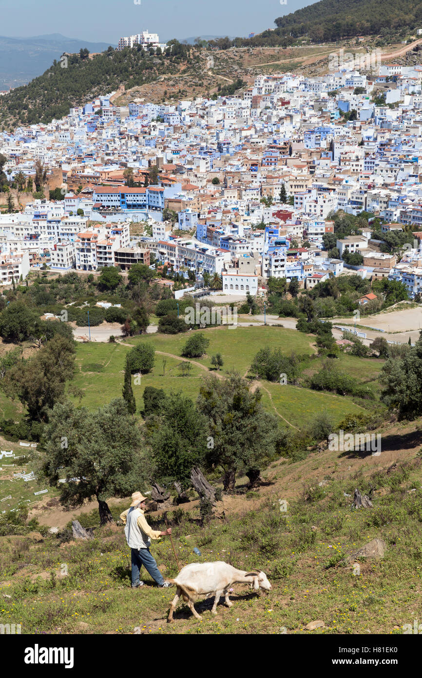Morocco,Chefchaouen, shepherd with goat overlooking the city - Stock Image