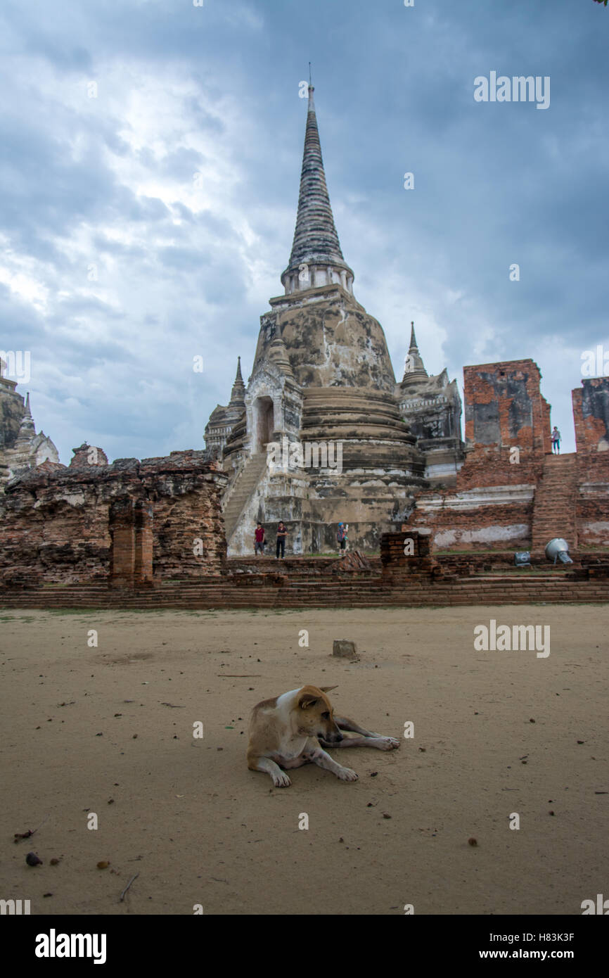Dog sitting outside Ayutthaya temple on a cloudy day Stock Photo