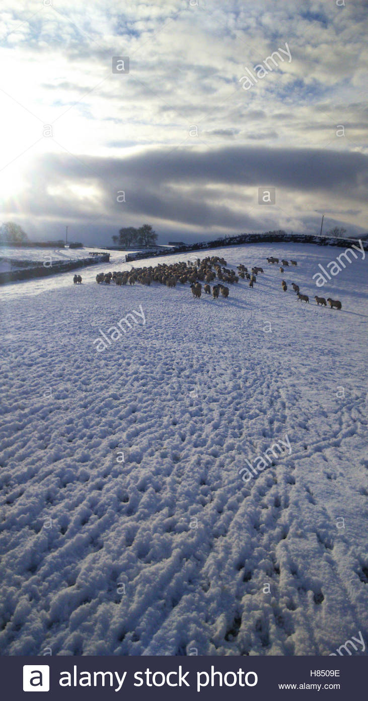 Nr.Middleton-in-Teesdale, Co Durham, UK 9th November 2016 Glimpses of afternoon sunshine lights  the morning snowfall - Stock Image