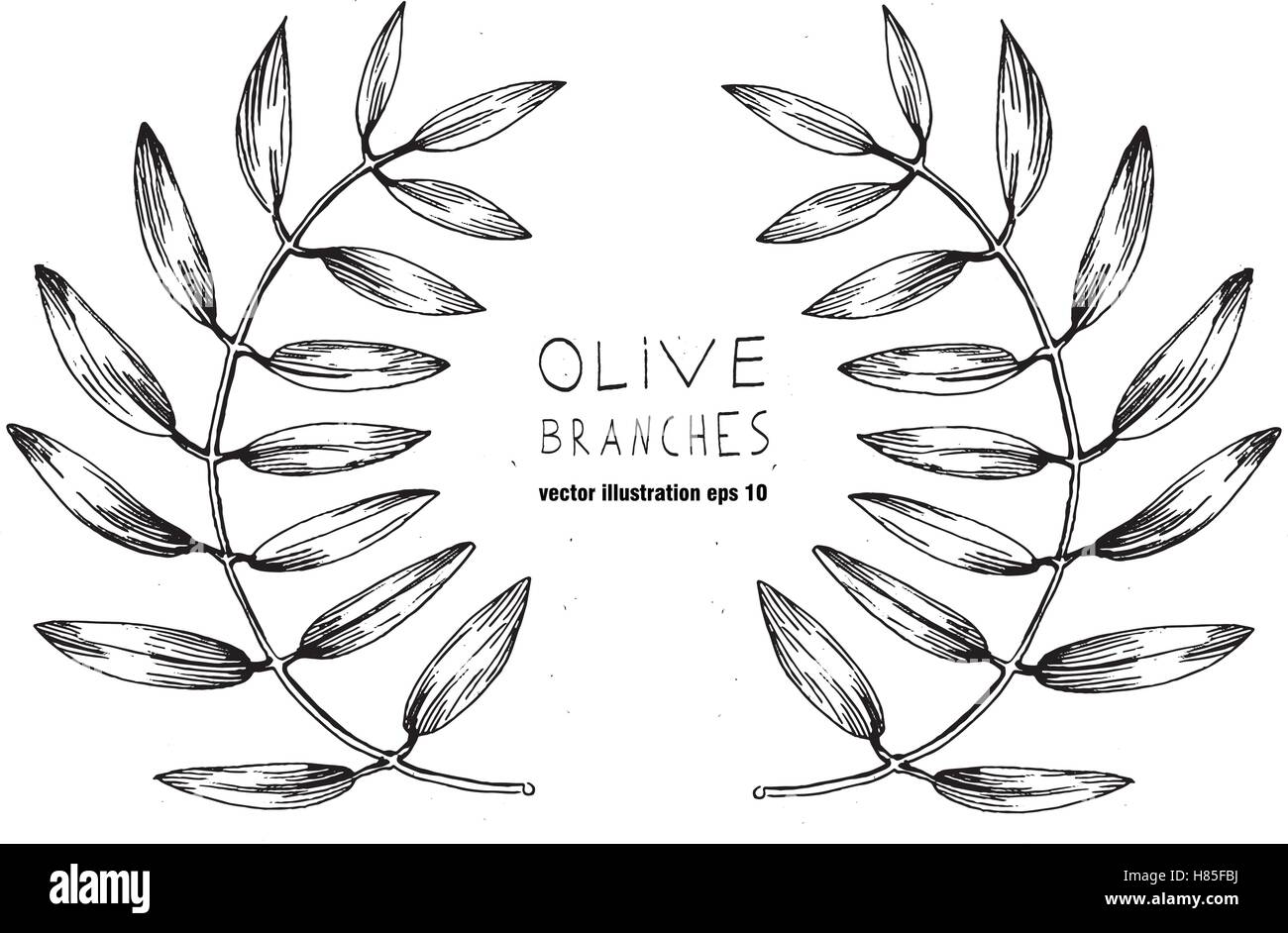 Set of green vector olive branch logo. Olives oil sign. Symbol of peace. Greek religious sign. Mythological icon.Healthy - Stock Image