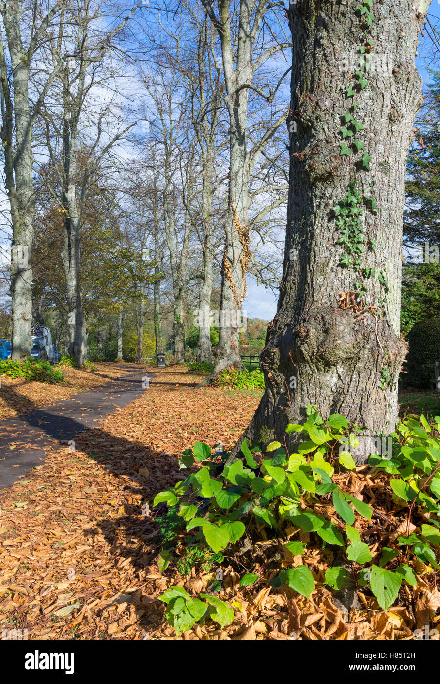 Autumn trees and leaves on the ground in Autumn in Arundel, West Sussex, England, UK. - Stock Image