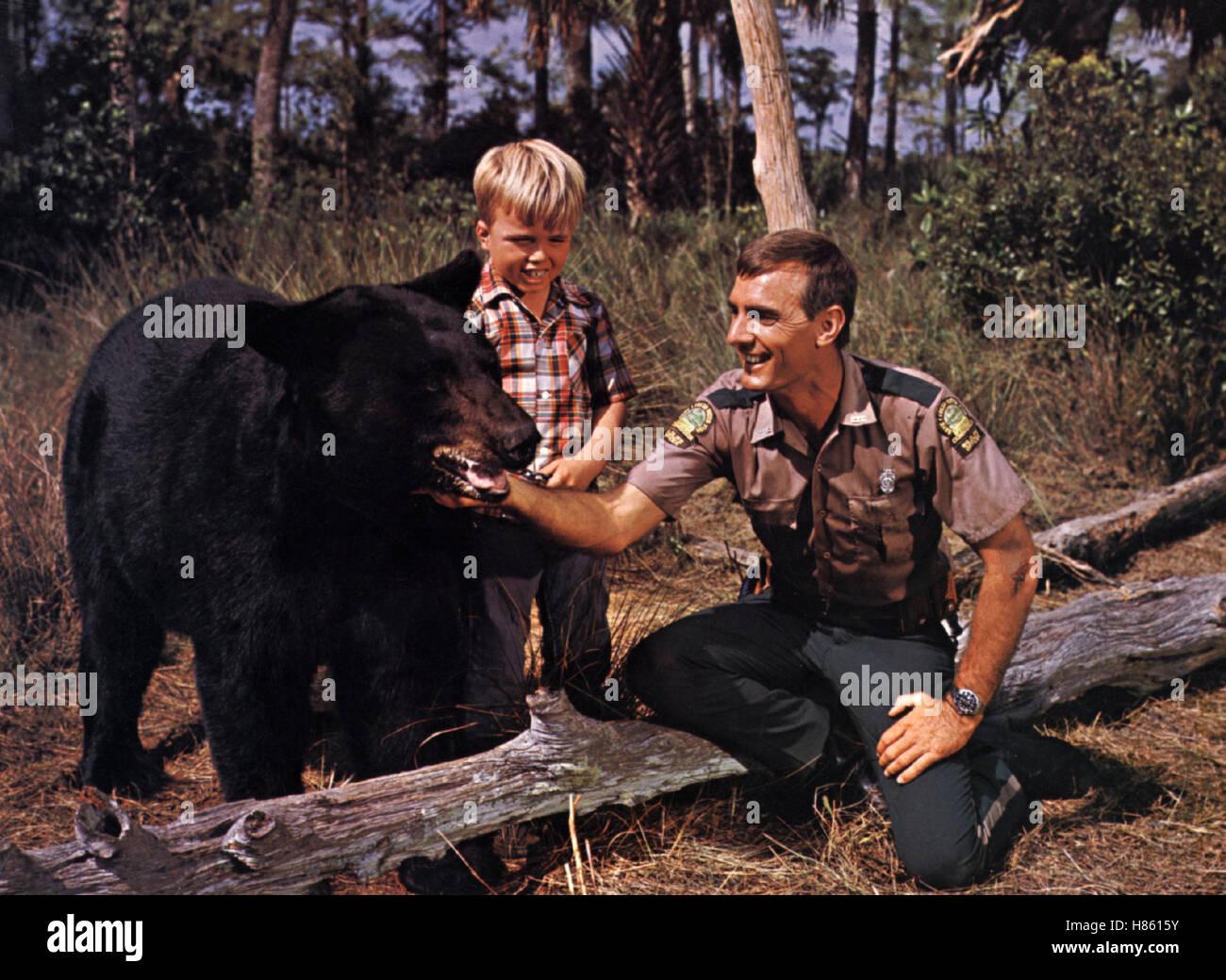 Der sanfte Ben, (GENTLE GIANT) USA 1967, Regie: James Neilson, Bär 'Ben', CLINT HOWARD, DENNIS WEAVER, - Stock Image
