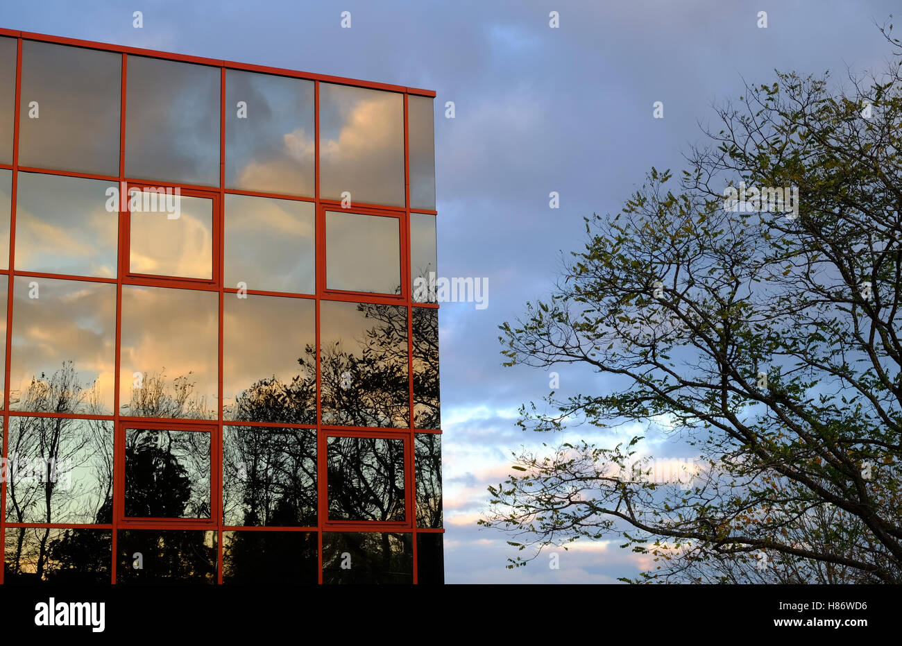 autumn trees part reflected in the glass wall of a modern building - Stock Image