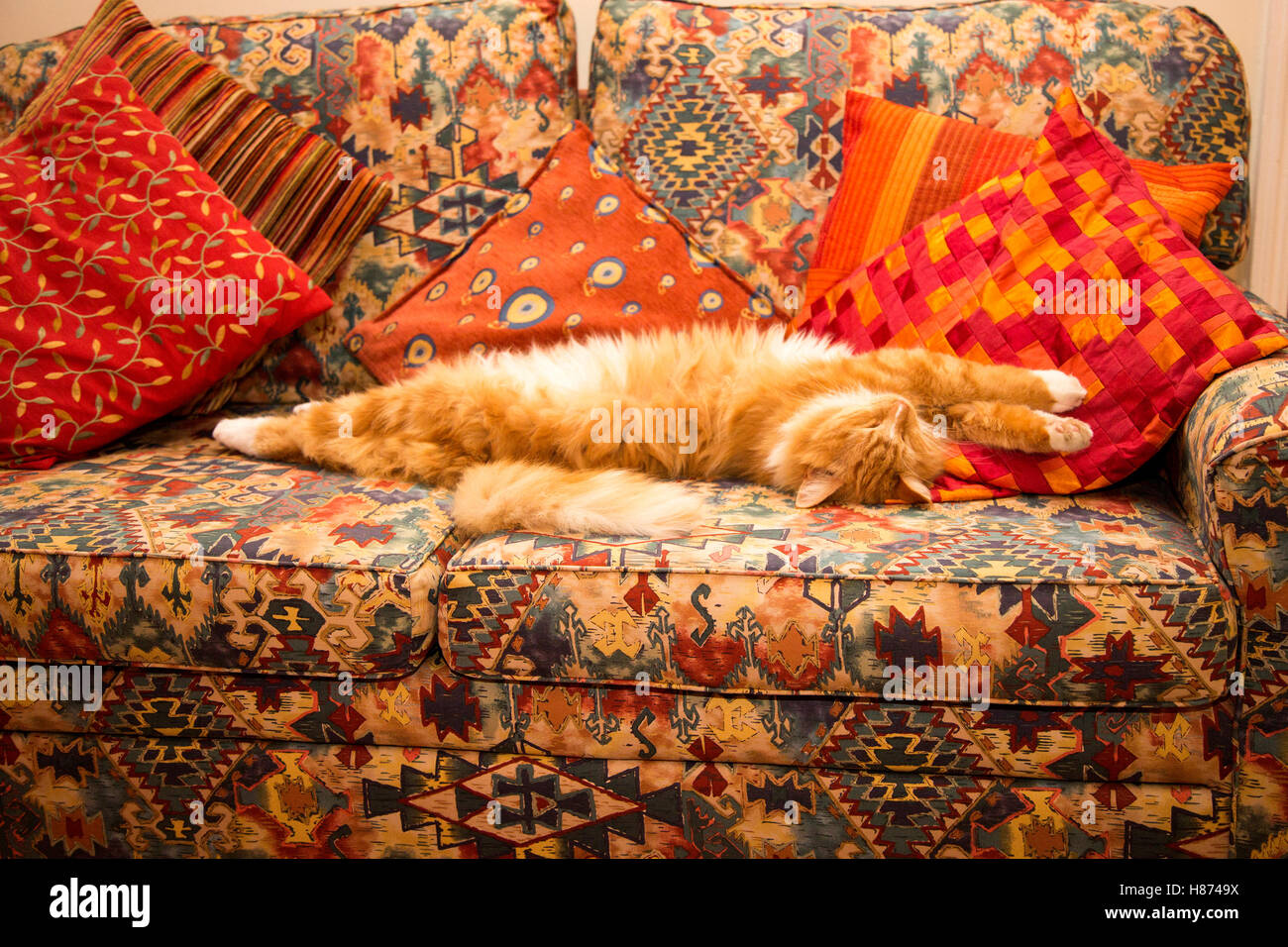 A young ginger cat sleeps on a brightly coloured sofa. - Stock Image