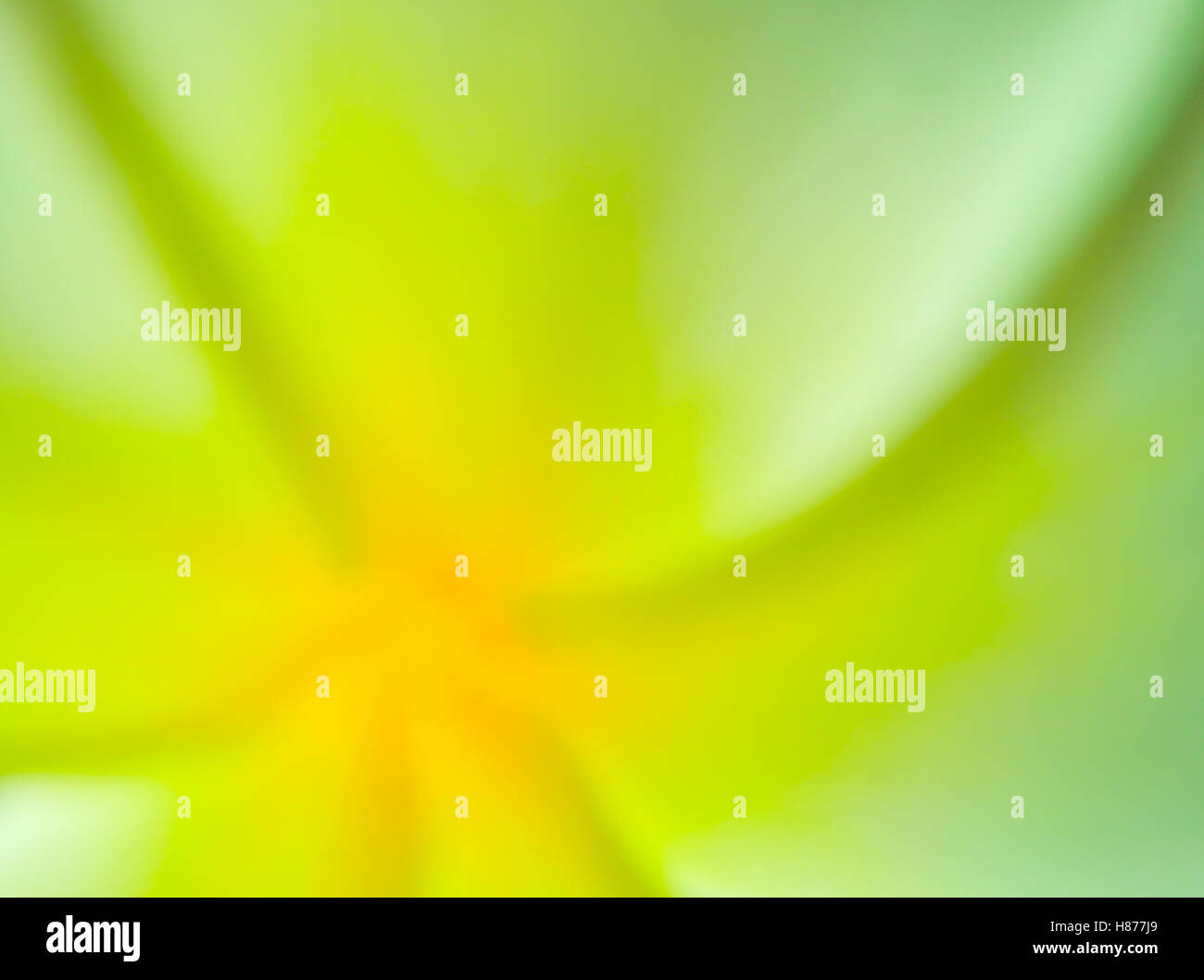 Blurred abstract photo of colorful color of flower in green and yellow tone. - Stock Image