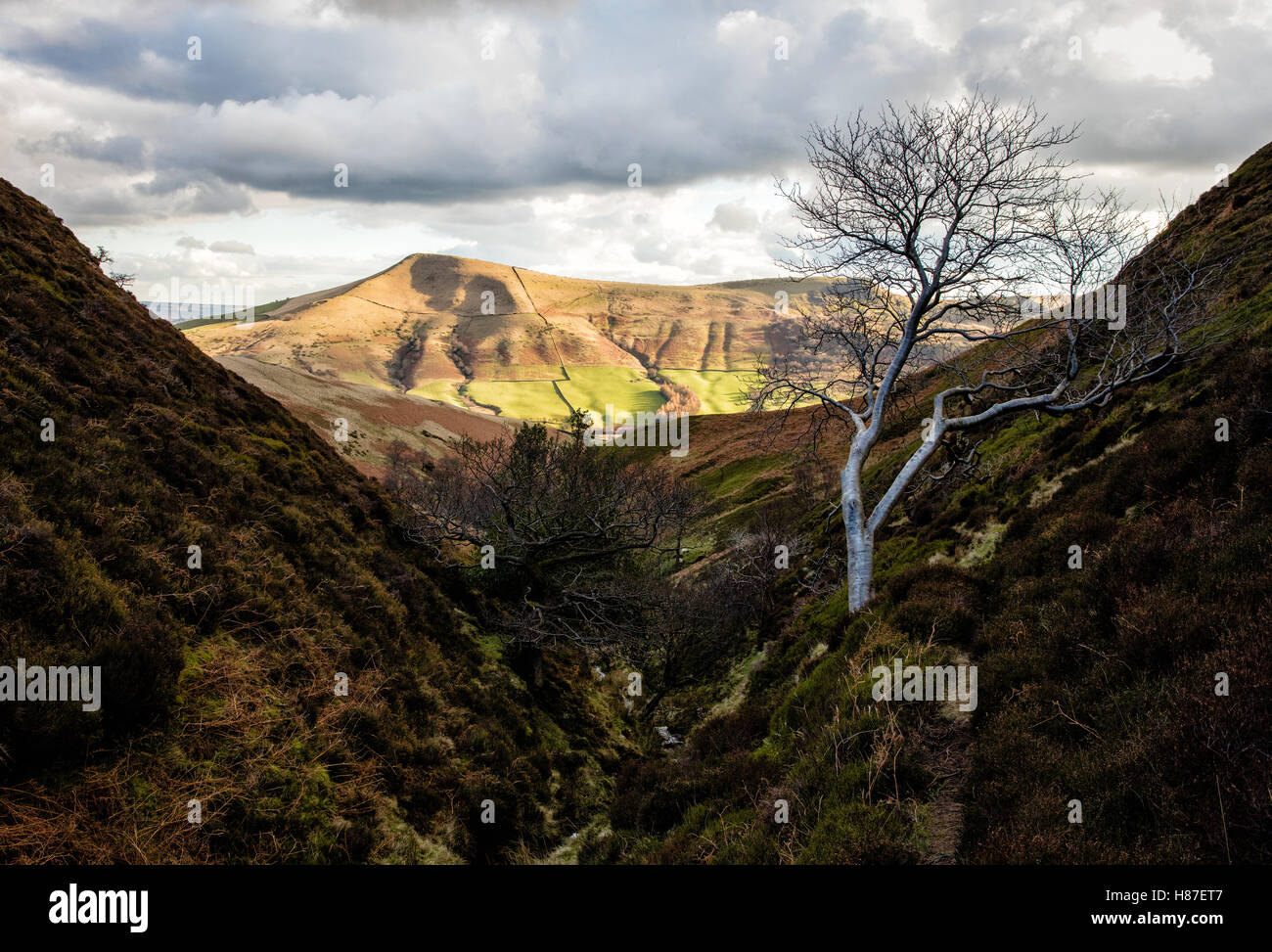 Sunlit Lose Hill from the steep valley of Lady Clough on Kinder Scout in the Derbyshire Peak District UK - Stock Image