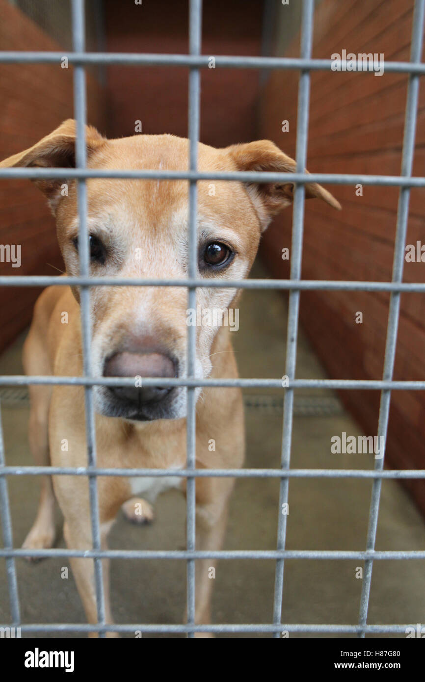 dog in rescue center Stock Photo