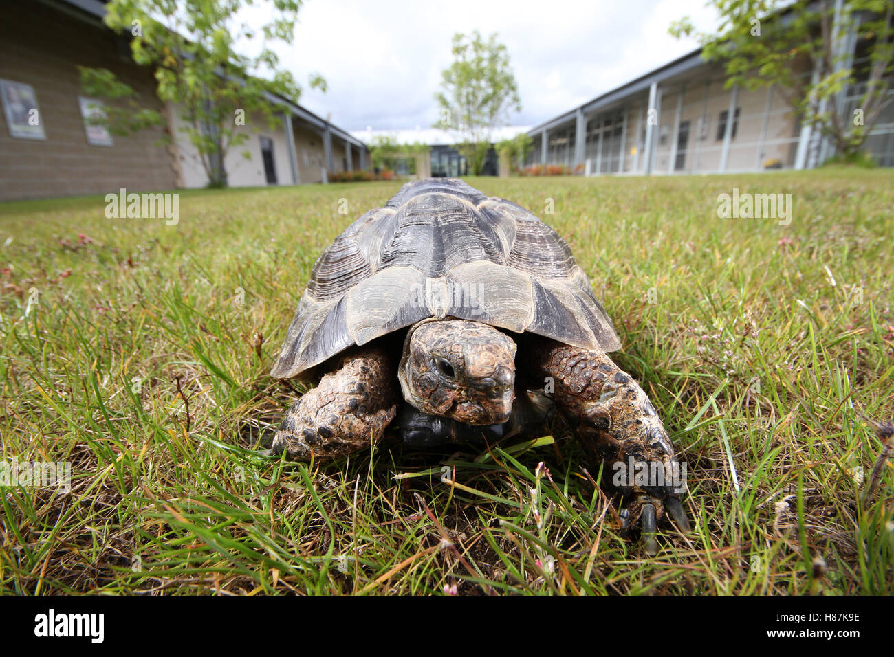 tortoise in garden Stock Photo