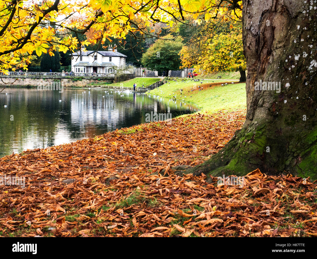 National Trust Tea Room by The Lake at Studely Royal Ripon Yorkshire England - Stock Image