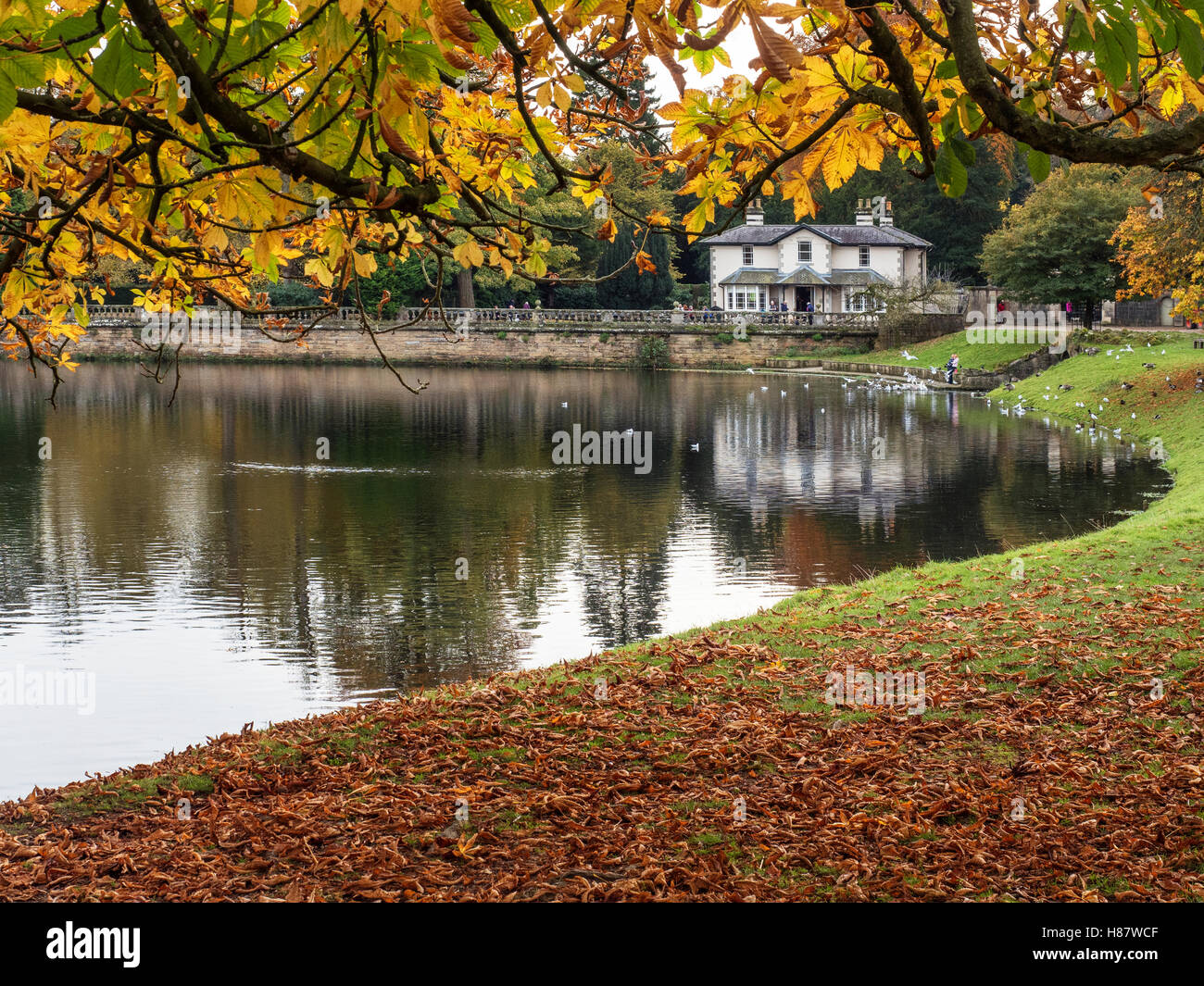 Tea Room by The Lake at Studely Royall Ripon Yorkshire England - Stock Image