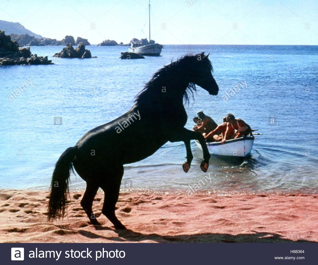 Der schwarze Hengst, (THE BLACK STALLION) USA 1979, Regie: Carroll Ballard, Stichwort: Strand, Meer, Pferd, Boot - Stock Image