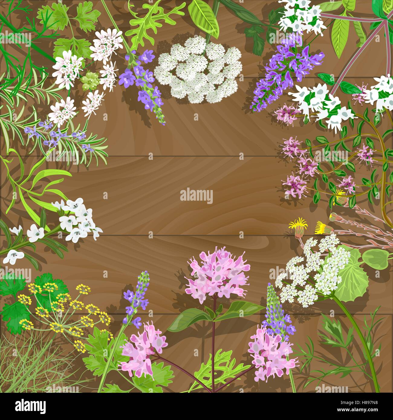 Circle of flowering herbs on wooden background.Salvia, angelica, oregano, rosemary, savory, verbena, anise, fennel, - Stock Vector
