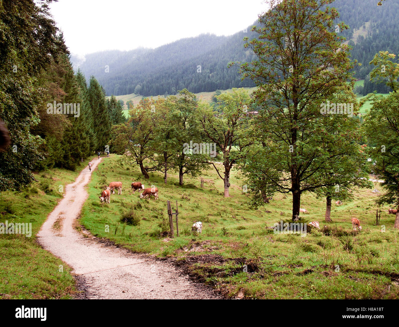Mountain peaks shrouded in cloud and mist surrounded by evergreen forests in Austria Stock Photo