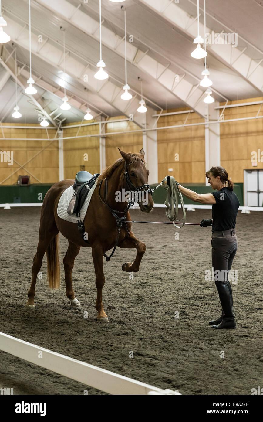 Pineland Farms Equestrian Center, New Gloucester, Maine, USA. - Stock Image