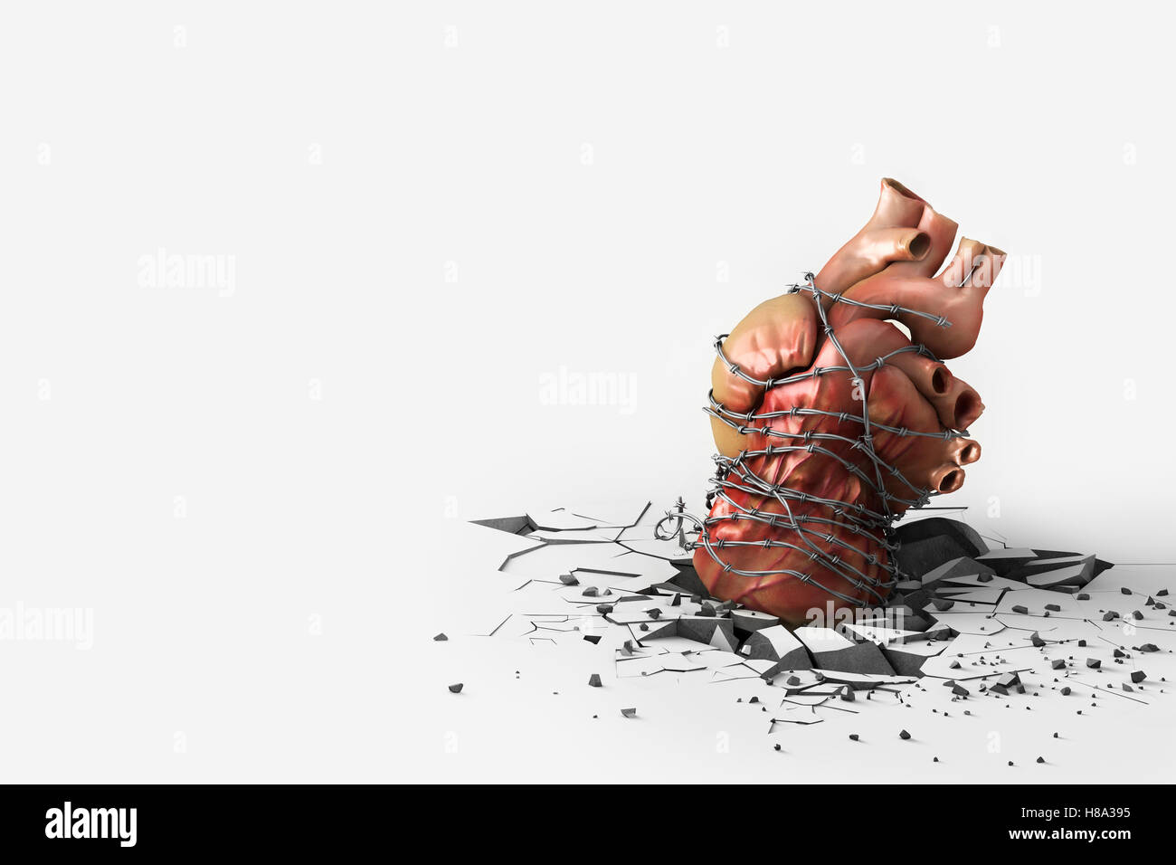Human Heart wrapped in barbed wire depicting a heart attack Stock ...