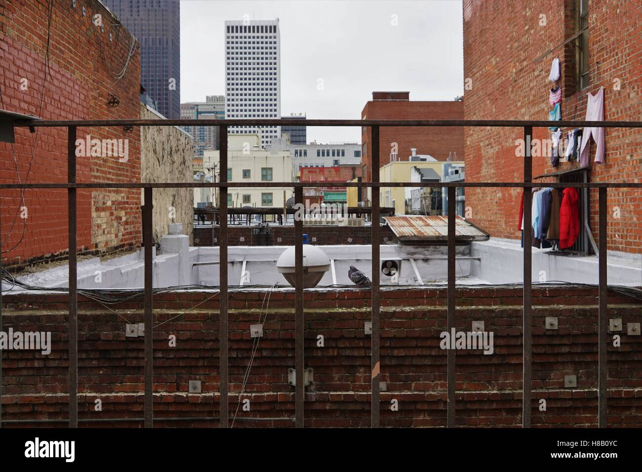 Pigeon behind bars with clothes on the wall - backstreet San Francisco - Stock Image