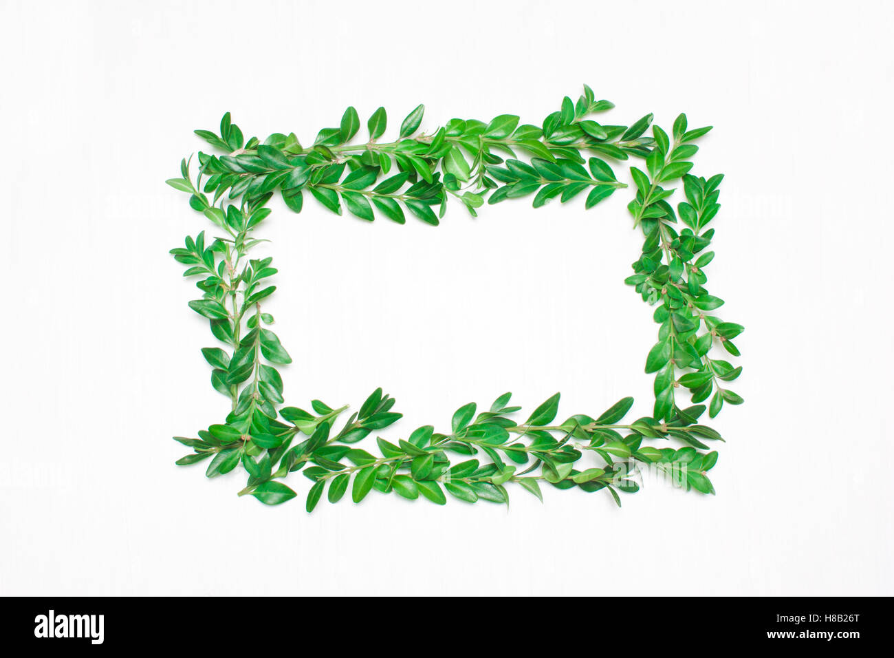 Frame of green leaves on a white background. View from above - Stock Image