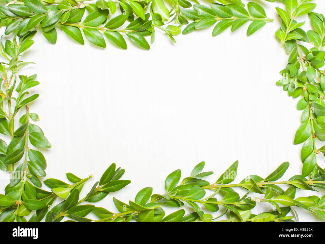 Framing of green leaves, plants on a white background. View from ...