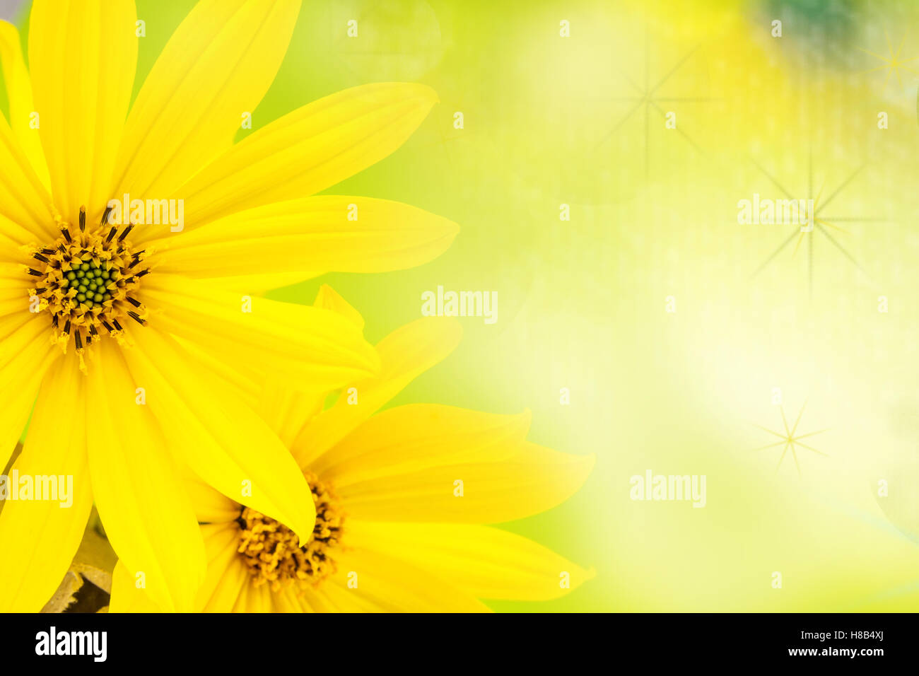 Yellow Flower With Thin Petals On Light Natural Green Background