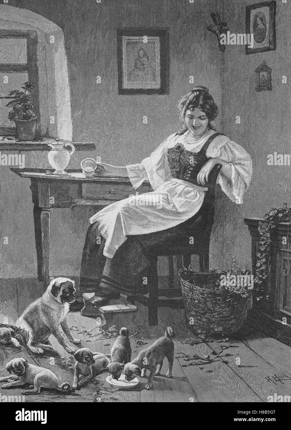 The domestic dog has many puppies, housewife gave for the dog milk, Woodcut from 1892 - Stock Image