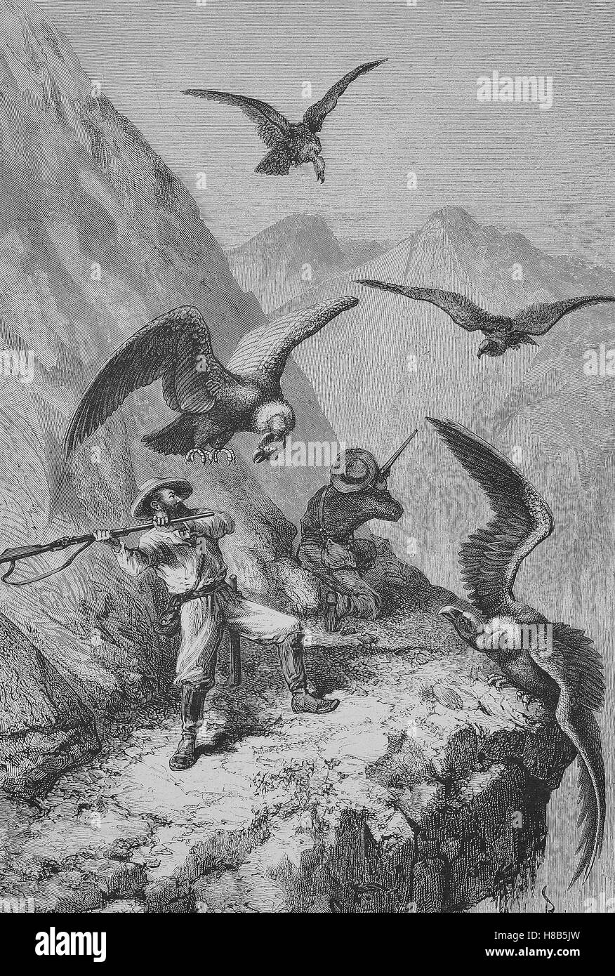 Hunters fighting with condors, Woodcut from 1892 - Stock Image