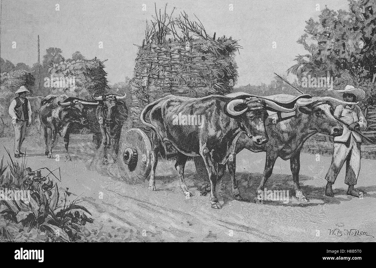 Peasant cart pulled by cattle in Chile, Woodcut from 1892 - Stock Image