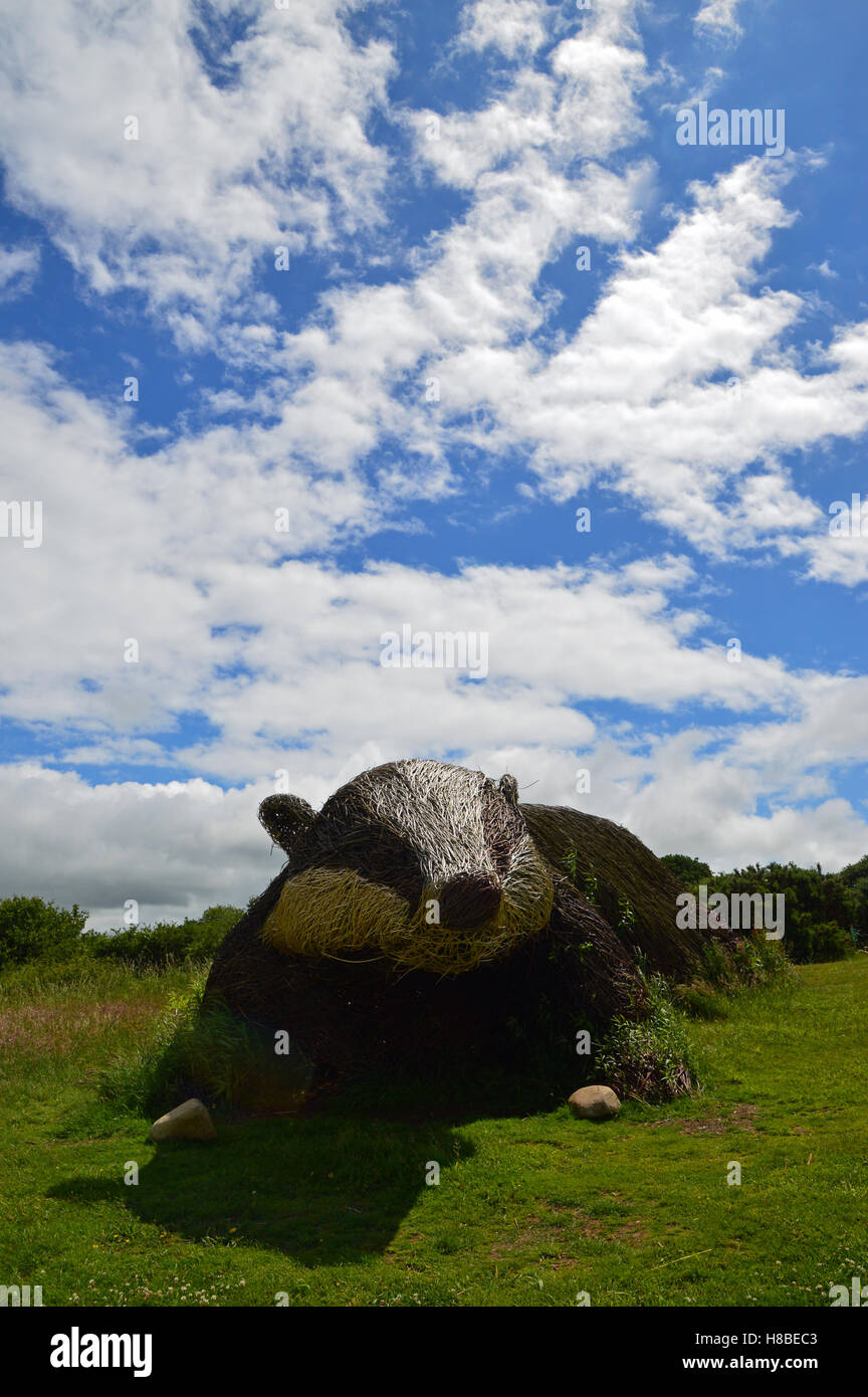 Giant willow badger at the Welsh Wildlife Centre, Cardigan, Ceredigion Stock Photo
