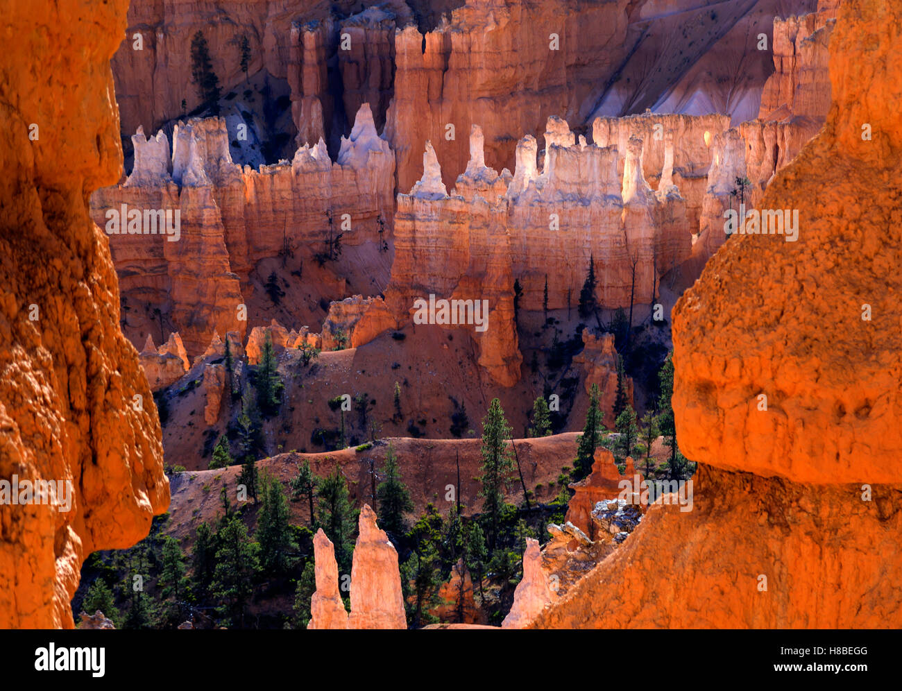 The red and white rock formations glow in the sun, as seen from the Queens Garden Trail Bryce Canyon National Park - Stock Image