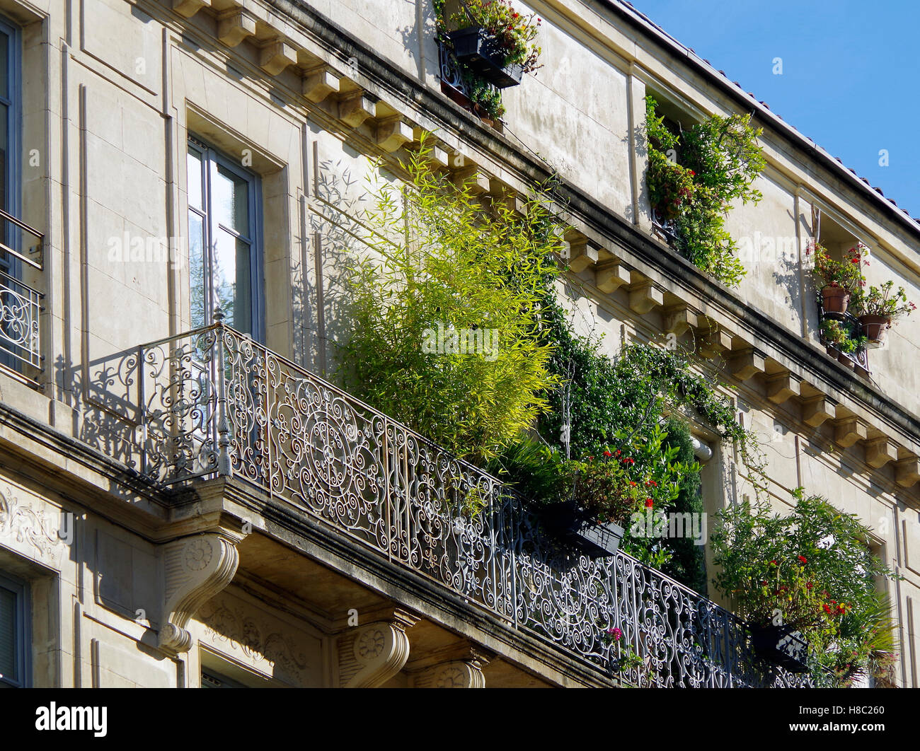 Nimes, balconies of C18 houses smothered in plants - Stock Image