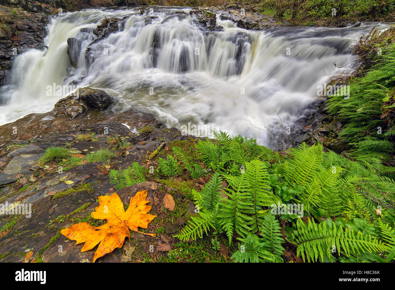 Yacolt Creek Falls at Moulton Falls Regional Park in Clark County Washington State in Autumn - Stock Image