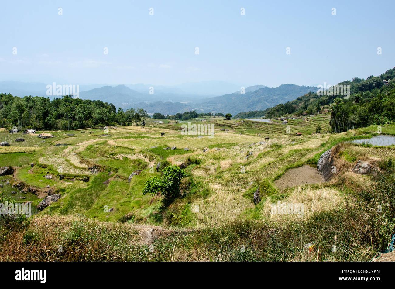 Landscape of Batutumonga, South Sulawesi - Stock Image