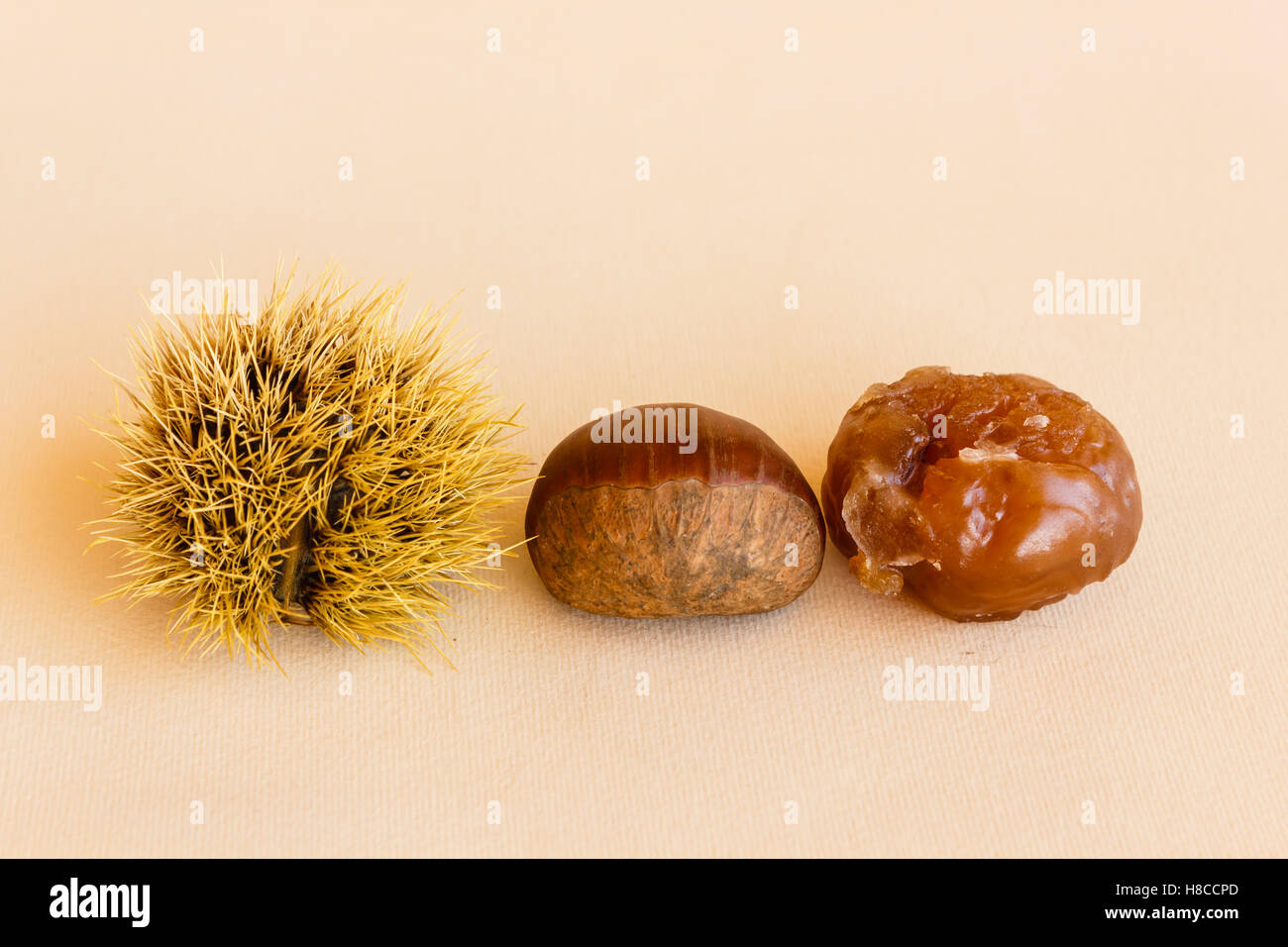 the chestnut husk becomes maturing from green to dark brown and contains the chestnut , which worked becomes marron Stock Photo