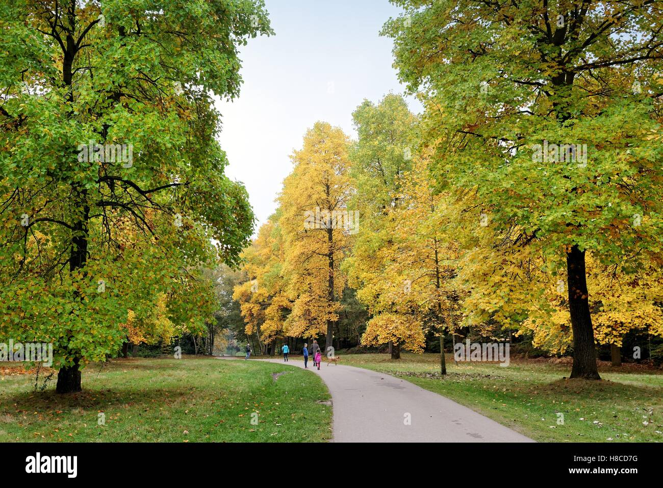 Autumn colours in Windsor great park Berkshire UK - Stock Image