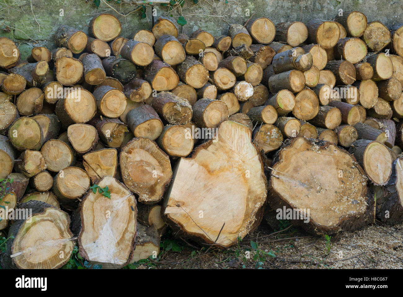 Logges softwood in a garden - Stock Image