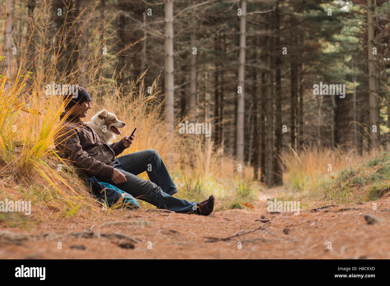 A man and a dog hiking in the woods looking at the phone dogs sitting on a woodland trail in autumn - Stock Image