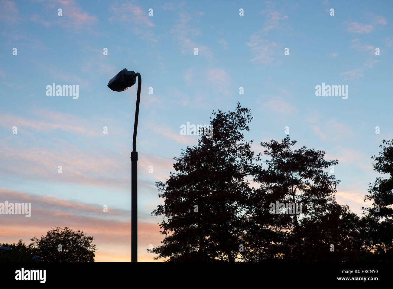 Unlit street lamps at twilight with trees and deep blue sky at a colourful sunset. - Stock Image