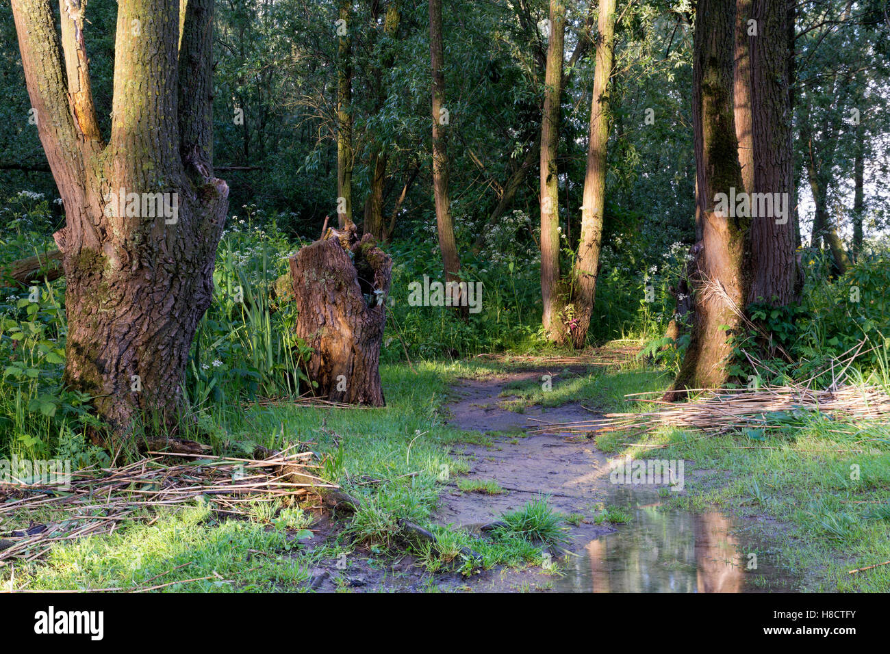 Nature area along the river Nieuwe Merwede - Stock Image