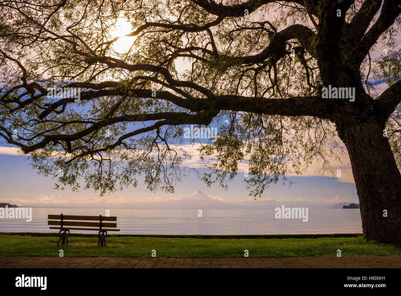 Tree and bench in front of the volcan osorno, Chile - Stock Image