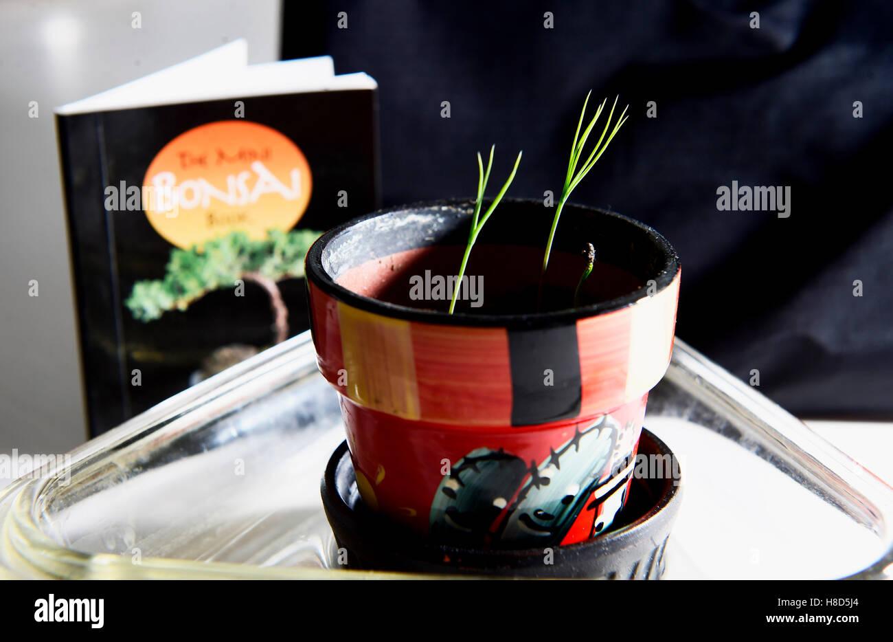 bonsai tree growing kit instructions