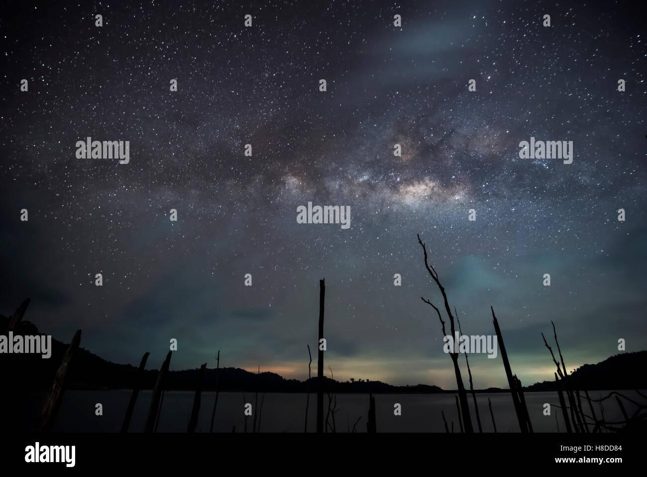Milky way over dead tree - Stock Image