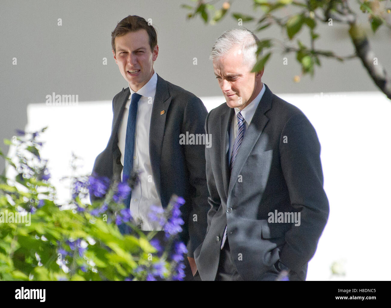Washington, Us. 10th Nov, 2016. Jared Kushner and White House Chief of Staff Denis McDonough walk through the Rose - Stock Image