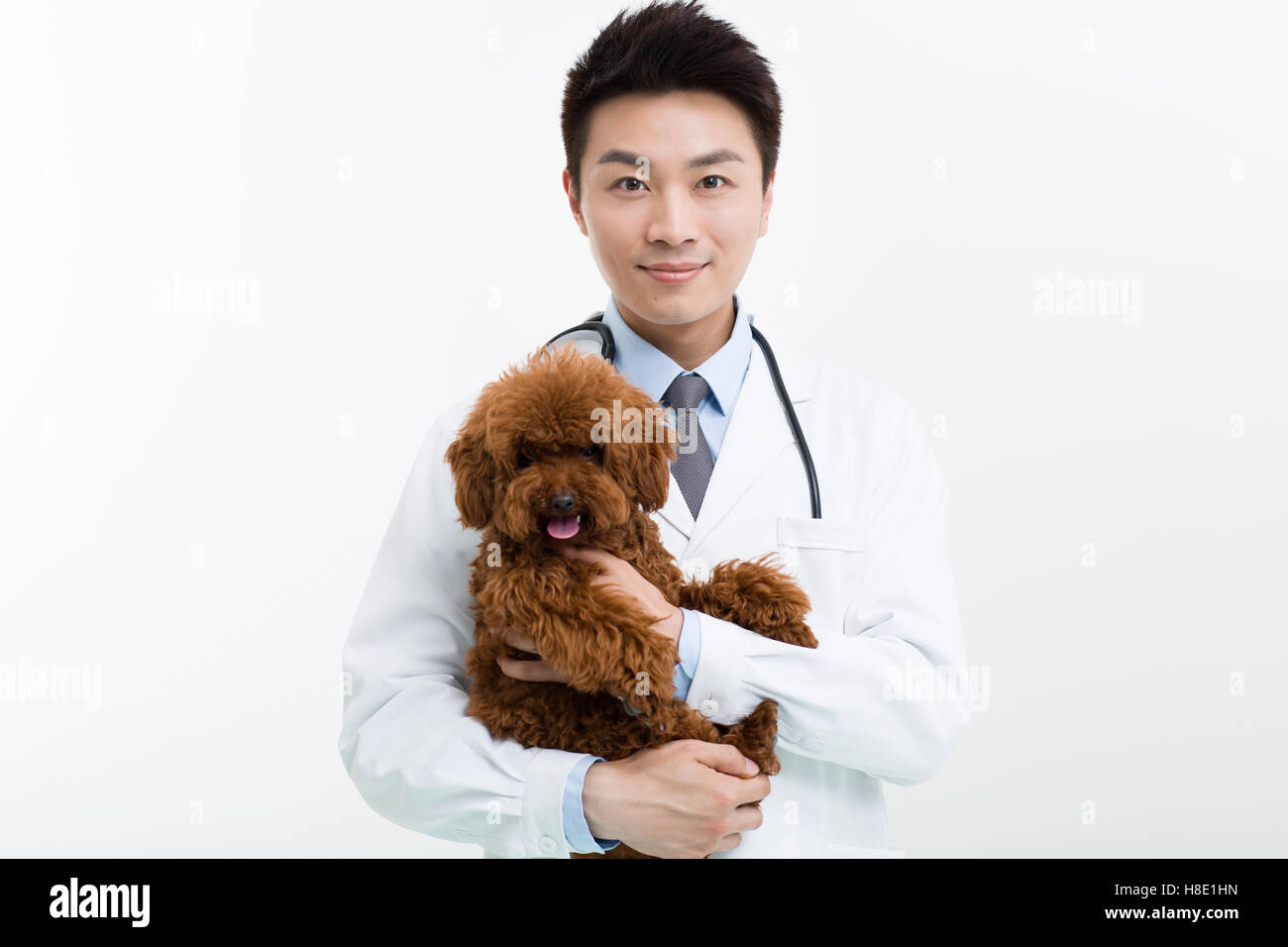 Chinese veterinarian and a cute poodle - Stock Image