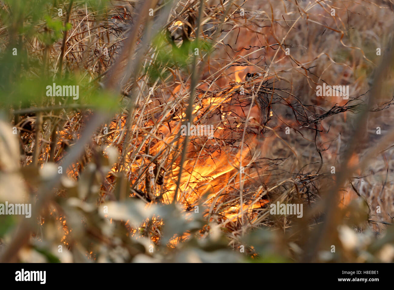 Summer wildfires burning in the Forest at rural area of Khon
